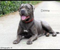 Lummen-Donna